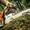 Покос травы и газона, спил кустарников и  деревьев - Изображение #2, Объявление #1232966