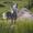 Сдам пол дома (дачу) в Зелёном (Заславль) #1261628