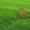 газоны и благоустройство #1443742