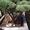 Приведем в порядок посадки хвойных растений #1621739