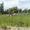 Участок 17, 6 соток,  Новашино 26 км от МКАД на продажу срочно #1637161