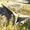 Отвал для бульдозера Т-150 (болотник) #1659257