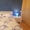 Сдам уютную, светлую квартиру на сутки, рядом с метро - Изображение #1, Объявление #1662968