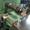 20-14-8060/2        BACCI Полуавтоматический долбёжный станок (б/у) - Изображение #5, Объявление #1701497