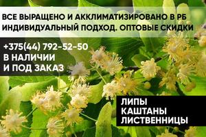 Липы, каштаны, лиственницы - Изображение #1, Объявление #1652223