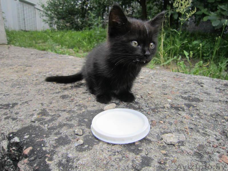 отдам в хорошие руки стильного черного котенка, Объявление #322185