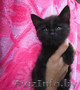 отдам в хорошие руки стильного черного котенка - Изображение #2, Объявление #322185