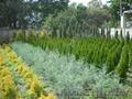 Питомник растений Беларусь