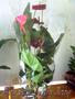 Антуриум. Комнатные растения Минск в Минске, продам, куплю, растения в Минске - 872168, minsk.avizinfo.by