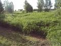 Продается земельный участок в Силичах - Изображение #3, Объявление #909596