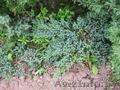 Посадочный материал декоративных растений