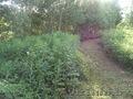 Продается земельный участок в Силичах - Изображение #5, Объявление #909596