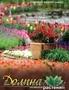 саженцы,  цветы,  семена собственного производства и вед.производителей Европы