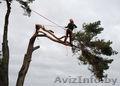 Спилить дерево любой сложности - Изображение #2, Объявление #1052451