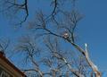 Спилить дерево любой сложности - Изображение #5, Объявление #1052451