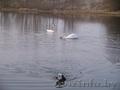 Участок на озере - Изображение #2, Объявление #1118330