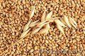 Закупаю зерно фуражное