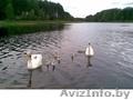 Дача Брестское напр 50 км Много фото