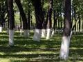 Краска садовая Яблонька для деревьев и кустарников