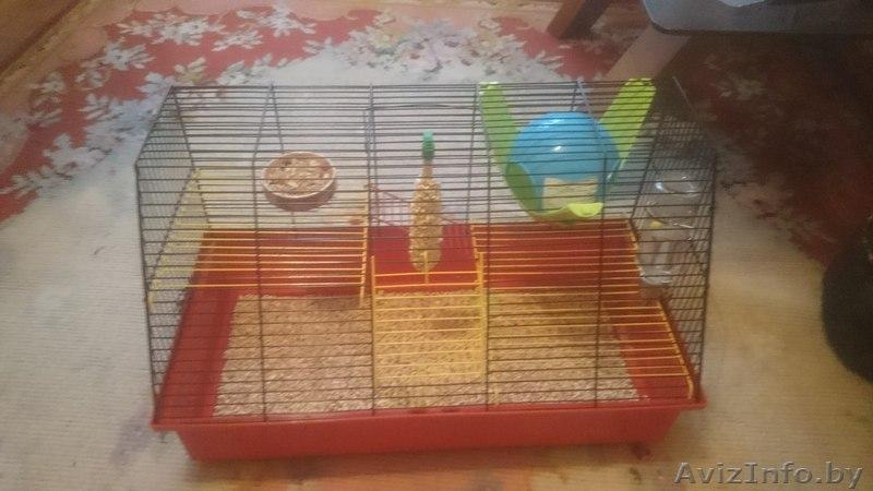 Клетка для крысы в минске продам