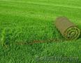 газоны и благоустройство