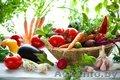 Поставка весовых семян овощей из Польши - Изображение #2, Объявление #1449201
