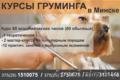 Курсы груминга, стрижки собак в Минске., Объявление #1481481