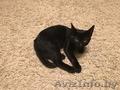 Замечательный котенок. Тепло и радость в Ваш дом. - Изображение #2, Объявление #1506621
