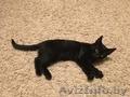 Замечательный котенок. Тепло и радость в Ваш дом. - Изображение #5, Объявление #1506621