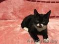 Скай - милый котёнок в добрые руки