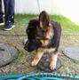 Воспитательная дрессировка щенка индивидуально и в группе.