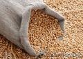 Зерно фуражное. Закупаем на постоянной основе., Объявление #1513241