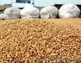 Организация на постоянной основе закупает зерно. опт, Объявление #1527938