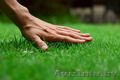 Рулонный газон по самым низким ценам!, Объявление #1572930