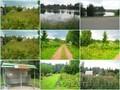 Продам участок 7 соток в с/т Чаровница 33 км.от Минска.  - Изображение #3, Объявление #1575762