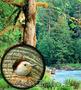 Бинокль Canon - Изображение #3, Объявление #1599659
