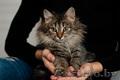 Кошечка Сенди ищет дом