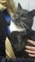 Шон - очень умный кот с чувством собственного кошачьего достоинства.