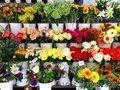 Продается прибыльный магазин цветов., Объявление #1612243
