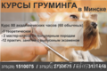 Курсы груминга в Минске.