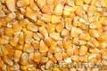 Кукуруза фуражная опт закупаем постоянно, Объявление #1610706