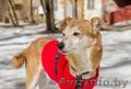 Юзик - пес компаньон в дар