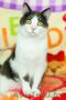 Хороший котик Томас ищет родителей, Объявление #1624285