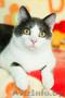 Хороший котик Томас ищет родителей - Изображение #4, Объявление #1624285