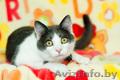 Хороший котик Томас ищет родителей - Изображение #2, Объявление #1624285