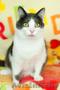 Хороший котик Томас ищет родителей - Изображение #5, Объявление #1624285