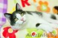 Хороший котик Томас ищет родителей - Изображение #3, Объявление #1624285