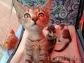 В дар: юная котейка Аврора ищет дом! - Изображение #3, Объявление #1625426