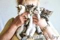 В дар: юная котейка Аврора ищет дом! - Изображение #7, Объявление #1625426