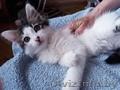 Кошечка Анфиса ищет дом